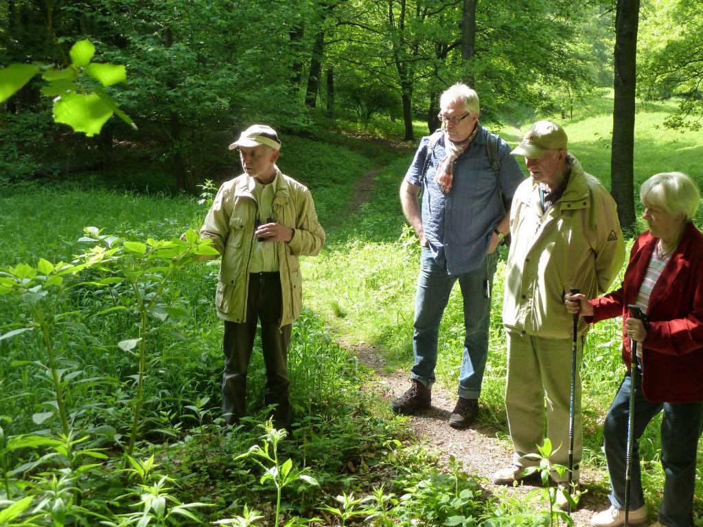 Burkhart Stratmann (links) zeigt den Teilnehmern die Orchideen im Naturschutzgebiet Mackenberg bei Oelde.